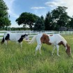 Durables 3-Rail Vinyl Ranch Rail Horse Fence with 7' Posts (Gray) - Priced Per Foot (White Shown As Example)